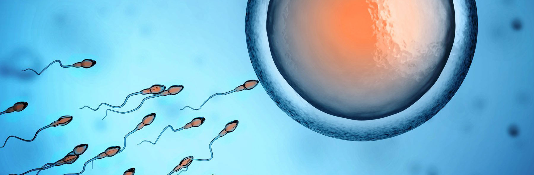 Донація яйцеклітин